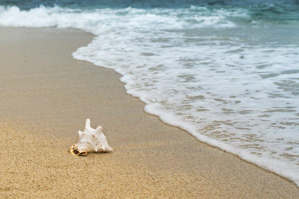 shellfish, mussel, sand