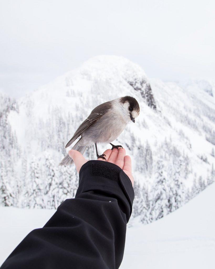 holding, bird, winter landscape