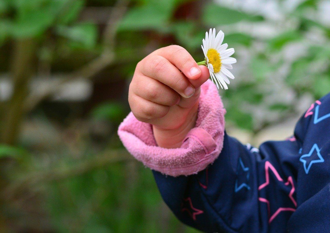 hand, child's hand, marguerite